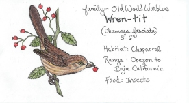 California Wren-tit in Prismacolor and Ink